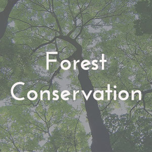 forestconservation